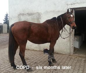 Cob, COPD after laser therapy