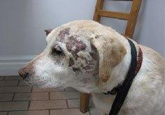 Chronic wound after laser therapy